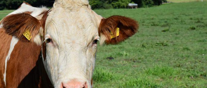 Video Series: Considerations for Landspreading Milk-NPM & UW-Madison Extension