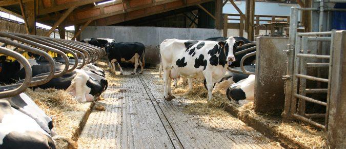 Heat Stress Abatement in Dairy Facilities – Video