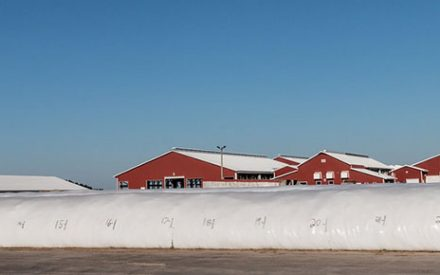 White plastic silage bag in front of red sided freestall barns with a blue sky.