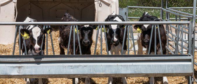 Calf Pairing Research