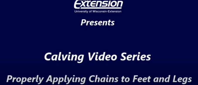 Bilingual Calving Videos: Properly Applying Chains to Feet and Legs