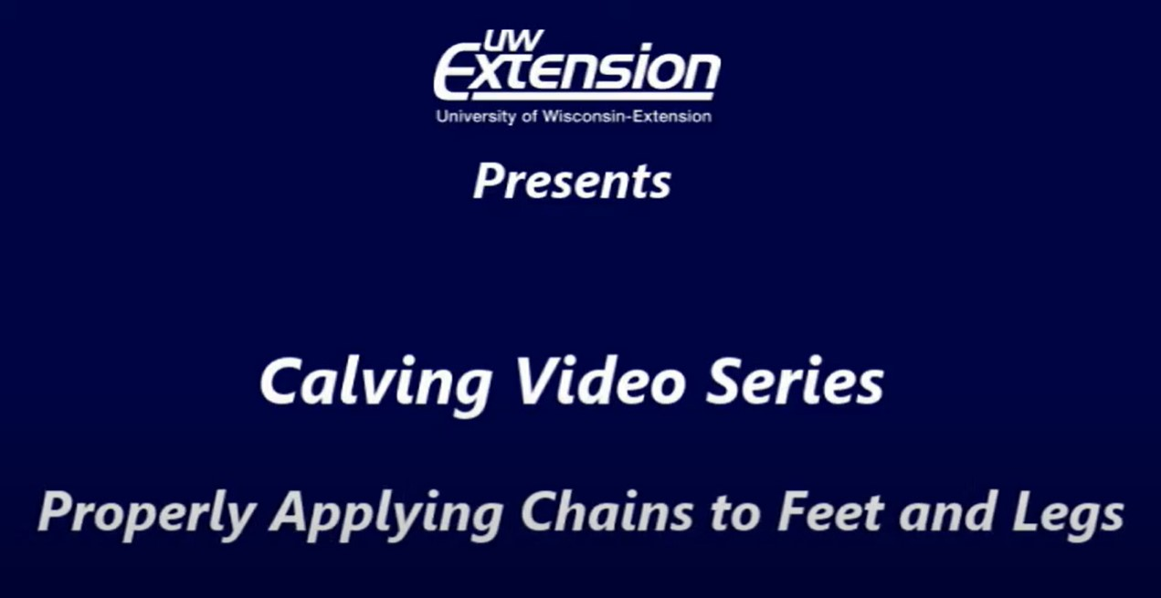 """Youtube screen card on a calving video series: """"properly applying chains to feet and legs"""""""
